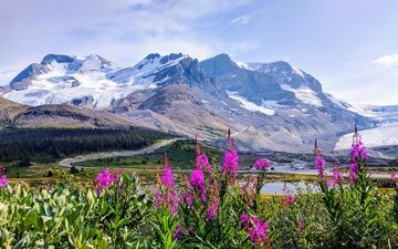 небо, дорога, цветы, горы, снег, лес, вершины, склоны, дымка, иван-чай