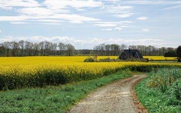 небо, дорога, цветы, трава, облака, деревья, тропинка, луг, дом, весна, домик, рапс