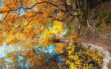 отражение, парк, осень, пруд